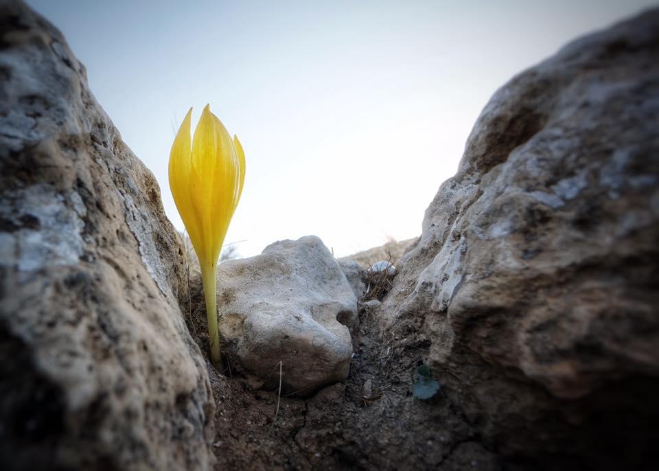 מתחת לסלע צילום: יוסי פתאל
