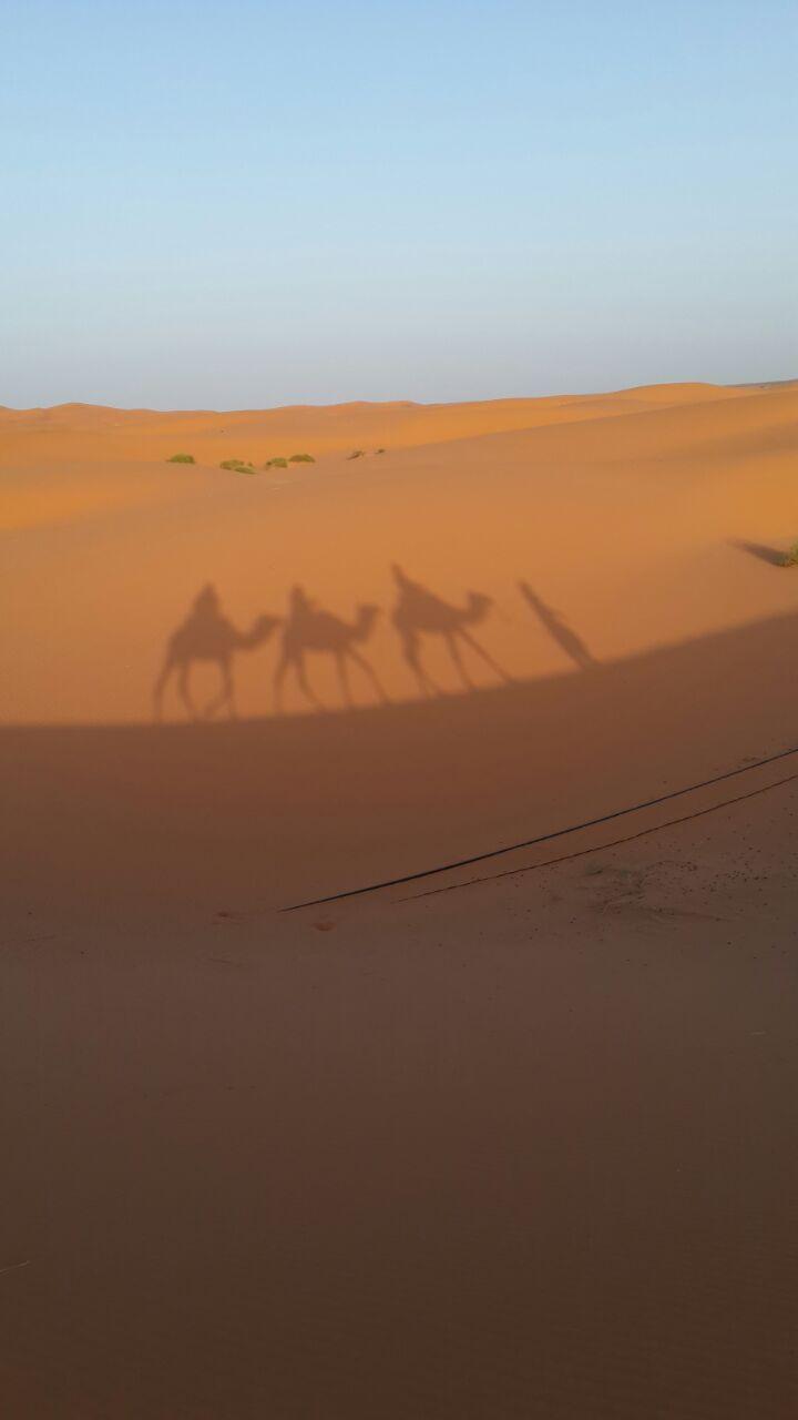צל גמלים צילום: מאיר פלג