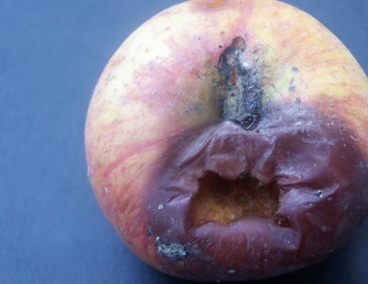 תפוח רקוב יכול לקלקל את הכול