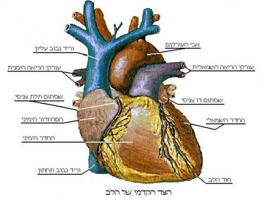 לב טוב נהיה בסוף לב חלש