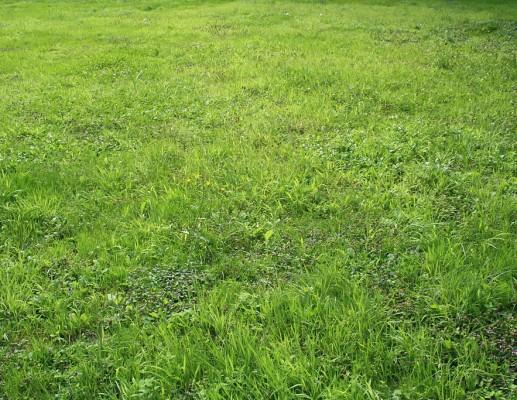 """להציל את חלקת הדשא של ד""""ר קצמן"""