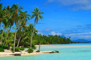 חוף עם דקלים