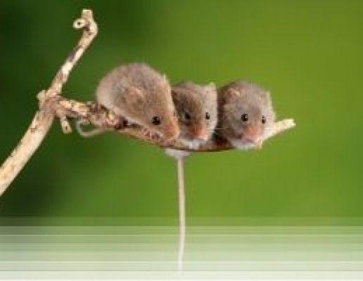 הדברה נגד עכברים וחולדות