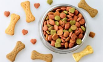 איך בוחרים אוכל לכלבים